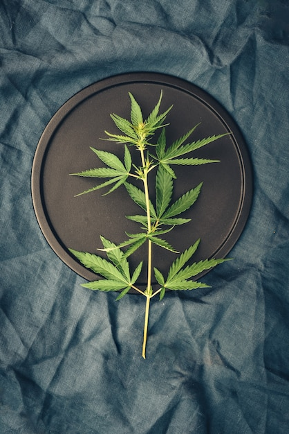 Szablon Z Liśćmi Marihuany Na Ciemnym Stole Do Produktów Z Konopi Indyjskich, Olej Cbd Premium Zdjęcia
