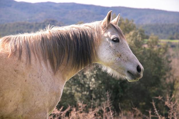 Szary Dziki I Stary Koń Z Ciemną Grzywą W Naturze Podczas Wiosny Z Zrelaksowanym Wyrazem Twarzy Premium Zdjęcia