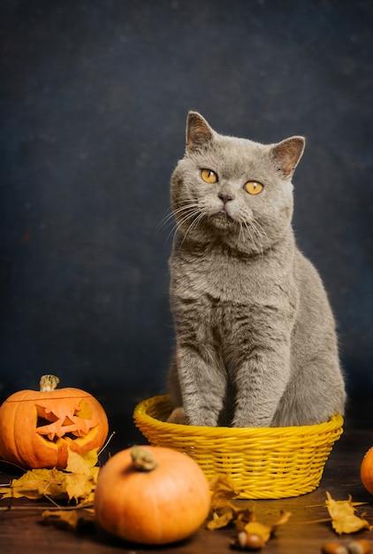 Szary kot o żółtych oczach siedzi w małym żółtym koszyku otoczonym jesiennymi liśćmi i dyniami. Premium Zdjęcia