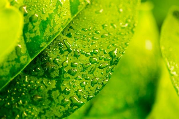 Szczegół Zielony Liść Premium Zdjęcia