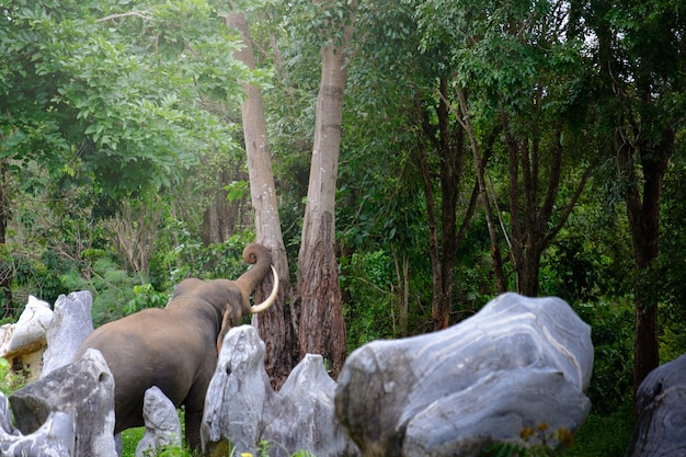 Szczery Obrazek Słoń W Dżungli Tajlandia Premium Zdjęcia