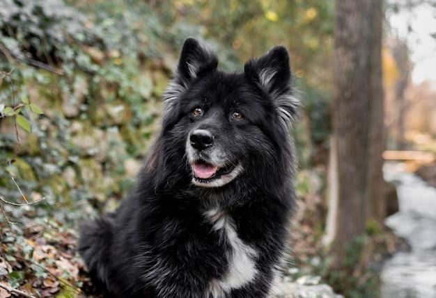 Szczęśliwy Duży Pies W Przyrodzie Darmowe Zdjęcia