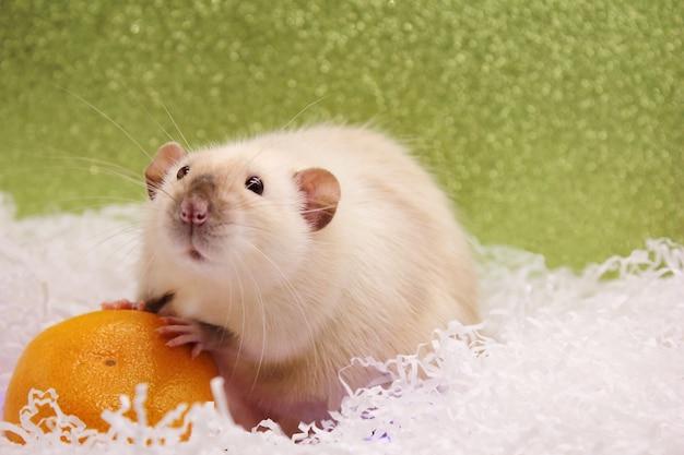 Szczur I Mandarynka. Szczęśliwego Nowego Roku. Rok Szczura 2020 Premium Zdjęcia