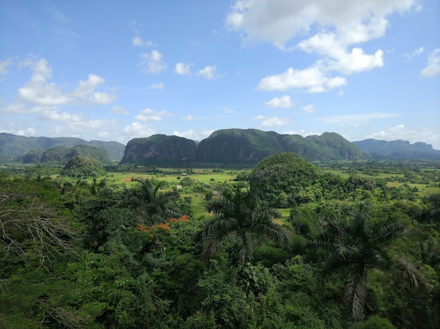 Szeroki Kąt Strzału Dużego Zielonego Krajobrazu Pełnego Drzew I Trawy Darmowe Zdjęcia