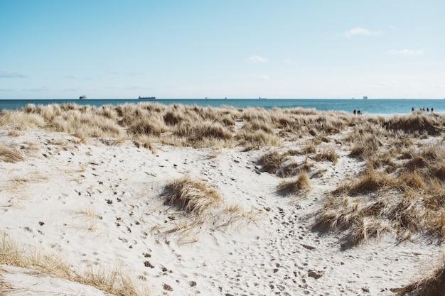 Szeroki Kąt Strzału Na Brzeg Otoczony Suchą Trawą Pod Błękitnym Niebem Darmowe Zdjęcia
