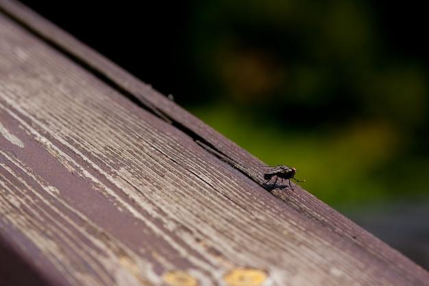 Szeroki Kąt Strzału Z Czarnej Muchy Stojącej Na Powierzchni Drewnianych Darmowe Zdjęcia