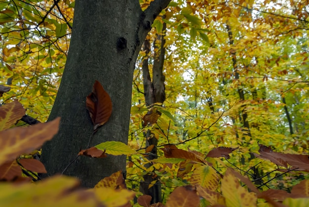 Szerokokątne Ujęcie Lasu Pełnego Drzew O Zielonych I żółtych Liściach Darmowe Zdjęcia