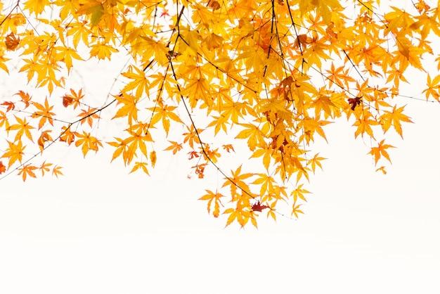 Sztuka Kolorowe Malownicze Jesienią Obszarów Wiejskich Darmowe Zdjęcia