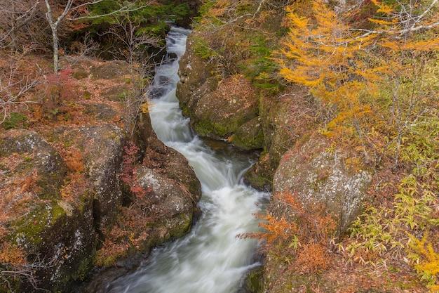 Szybko Płynąca Woda Potoku W Jesiennym Lesie, Niesamowity Kolorowy Krajobraz. Premium Zdjęcia