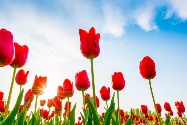 Tętniące życiem piękna romantyczna flora przyrody Darmowe Zdjęcia