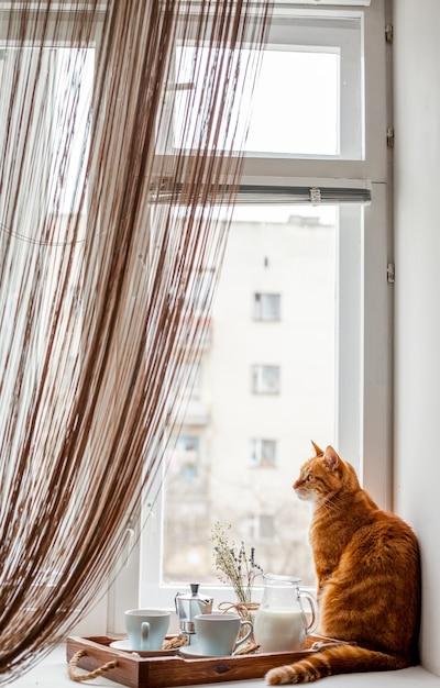Taca śniadaniowa z kotem Darmowe Zdjęcia