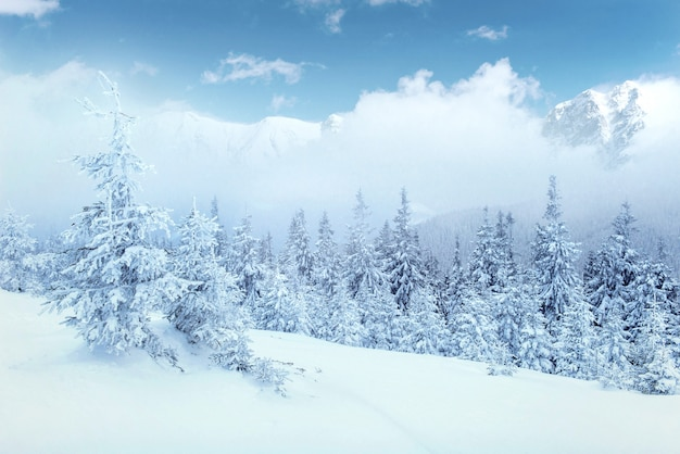 Tajemniczy Zimowy Krajobraz Majestatyczne Góry Zimą. Darmowe Zdjęcia