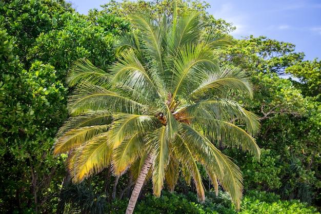 Tajlandia Piękne Palmy Premium Zdjęcia