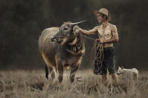 Tajlandzcy Rolnicy Stoją Ze Swoim Bizonem Podczas Pracy Na Polach Ryżowych. Premium Zdjęcia