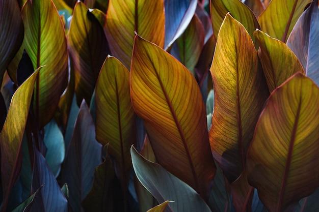 Talerze Liści Canna X Generalis Pomalowane Na Ciemny Fiolet Premium Zdjęcia