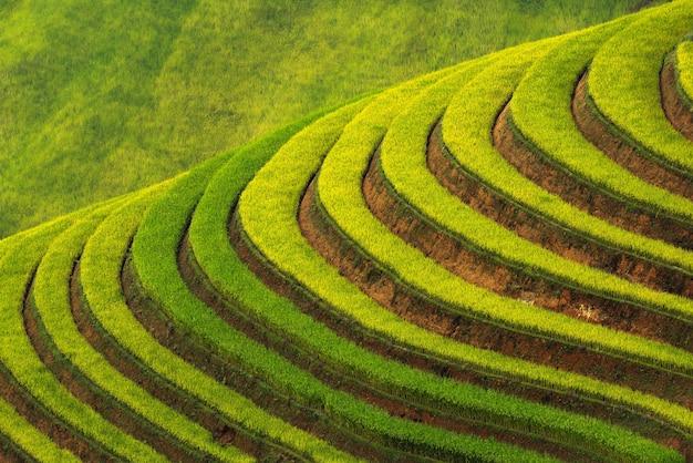 Tarasowaty Ryżowy Pola Ryżowego Krajobraz Mu Cang Chai Premium Zdjęcia