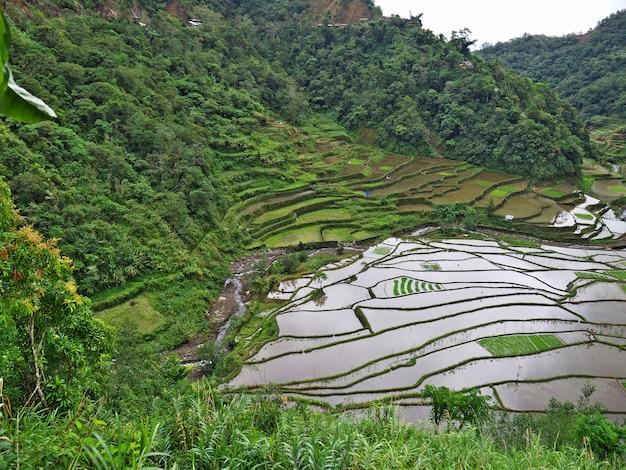 Tarasy Ryżowe W Banaue Na Filipinach Premium Zdjęcia