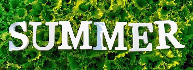 Tekst Lato Z Białych Liter Na Kręconej Zielonej Sałacie. Koncepcja Letniej Diety, Czas Detoksykacji, Zdrowe Jedzenie. Widok Z Góry Baner Premium Zdjęcia