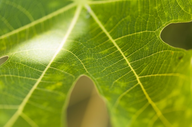 Tekstura Bliska Roślin Darmowe Zdjęcia