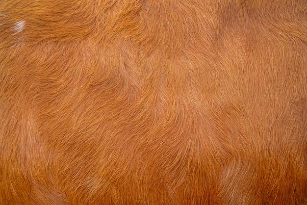 Tekstura Skóry Brązowej Krowy. Rolnictwo. Gładka Powierzchnia. Premium Zdjęcia