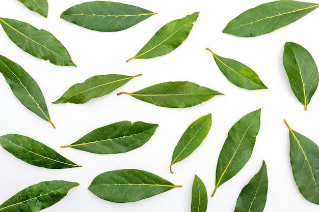 Tekstura świeżych i suchych liści laurowych. Premium Zdjęcia