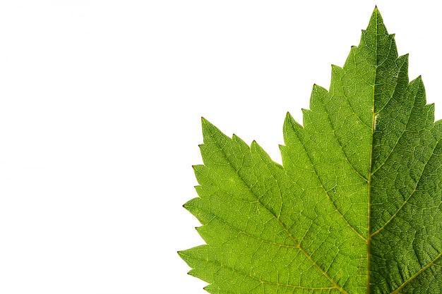 Tekstura winogrono liście odizolowywający na bielu Premium Zdjęcia