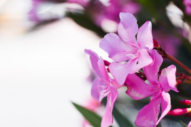 Tekstura zamknięci kwiaty Darmowe Zdjęcia