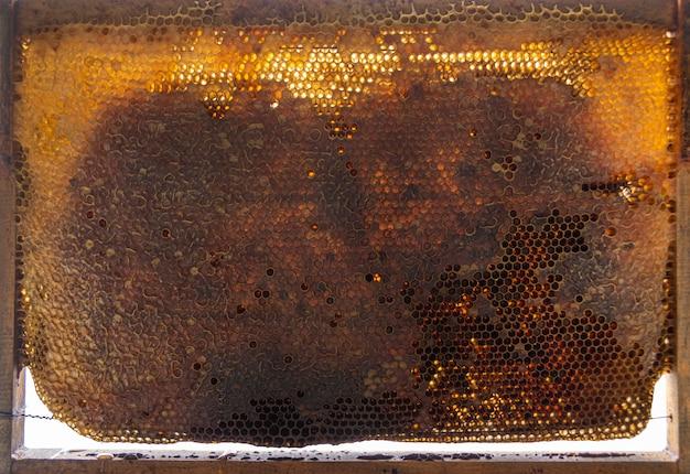 Tekstura żółty Plaster Miodu Darmowe Zdjęcia