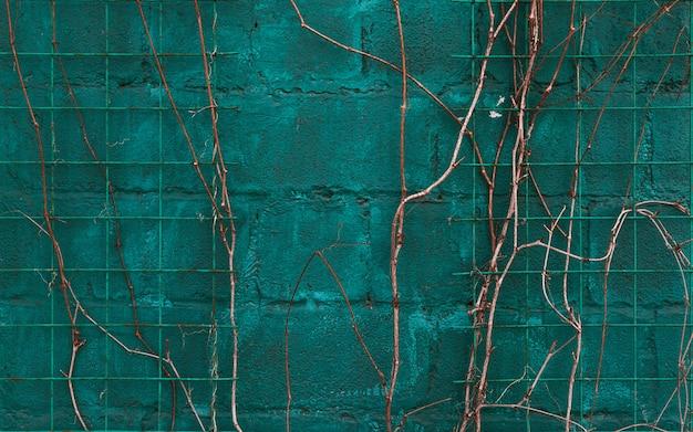 Tekstury błękita ściana z winoroślą Premium Zdjęcia