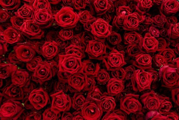 Tekstury Tła Czerwonych Róż Kwiatów. Czerwona Róża Oznacza Miłość I Romantyczność Premium Zdjęcia