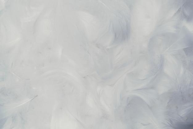 Tło Białe Miękkie Pióra. Premium Zdjęcia