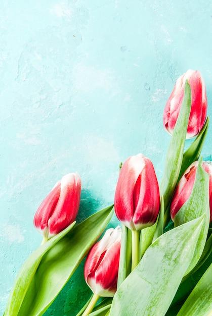 Tło dla kart z pozdrowieniami gratulacje świeże wiosenne kwiaty tulipanów na jasnoniebieskim tle Premium Zdjęcia