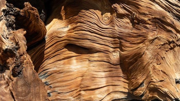 Tło Drzewa Porażonego Piorunem Darmowe Zdjęcia