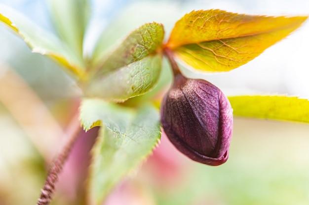 Tło Kolorowych Liści Jesienią. Piękna Kolorowa Jesień. Skład Arkusza Premium Zdjęcia