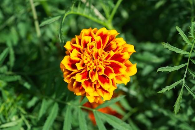 Tło Kwiat, Piękny I Jasny Kwiat Tagtes Premium Zdjęcia