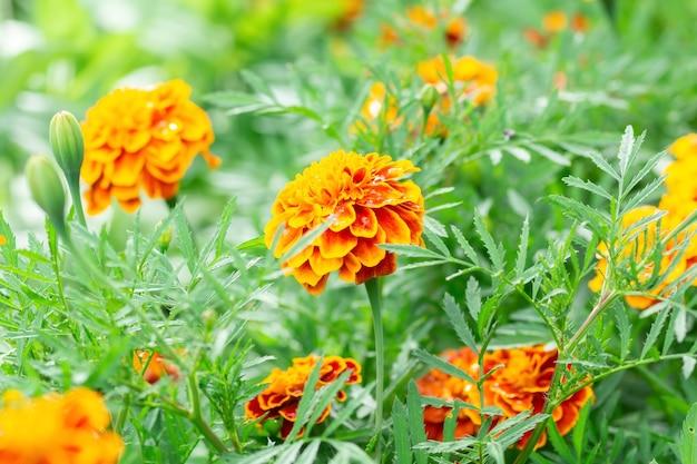 Tło Kwiat, Piękny I Jasny Kwiat Premium Zdjęcia