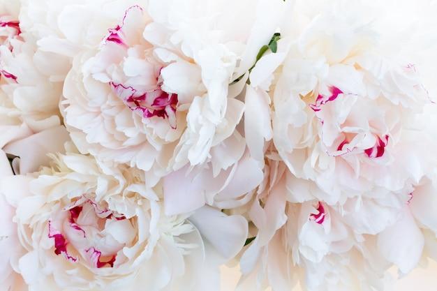 Tło Kwiaty świeżej Piwonii Premium Zdjęcia