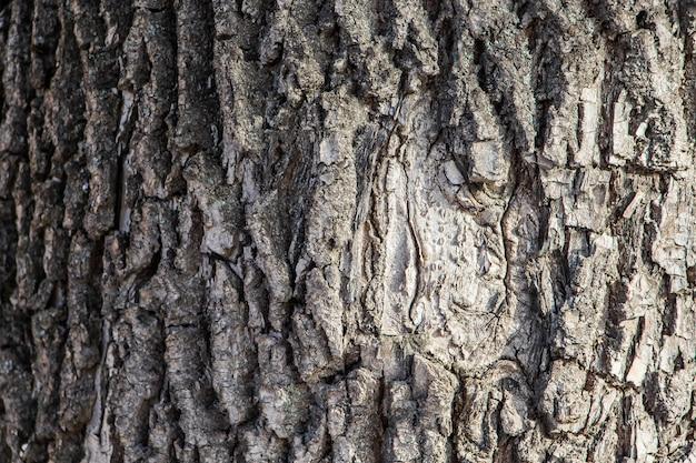 Tło Naturalne Kory Drzewa Premium Zdjęcia