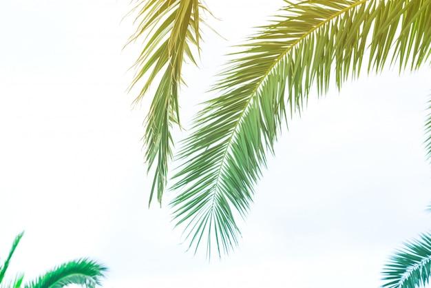 Tło palmowi liście z światłem słonecznym dla projekta, wakacyjnej podróży projekta stonowana rocznika pastelowego skutka kopii przestrzeń Premium Zdjęcia
