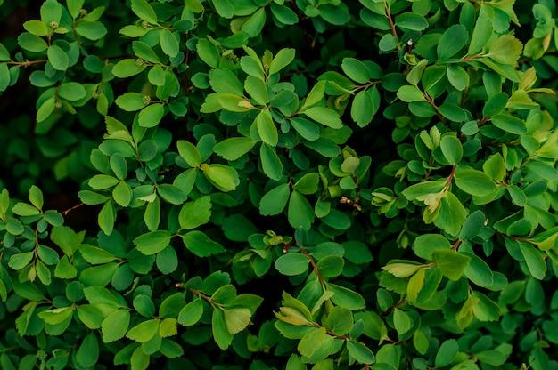 Tło Tekstura Tłustoszowata Zielona Roślina Premium Zdjęcia