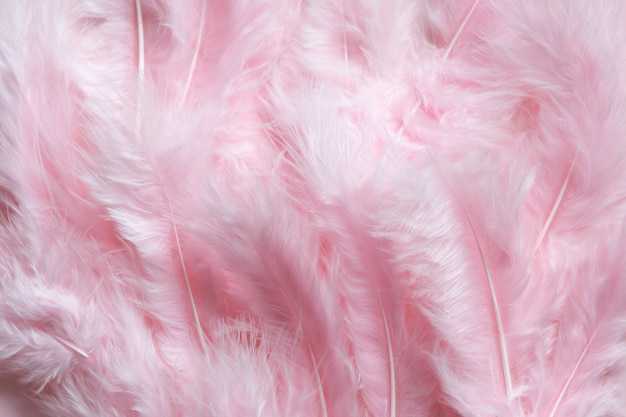 Tło Wielkanocne Puszyste Różowe Pióra Premium Zdjęcia