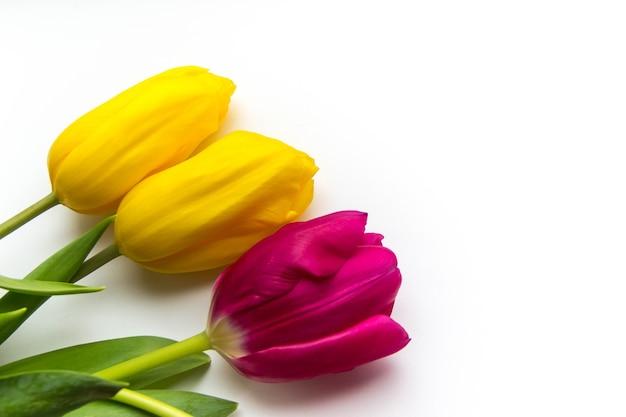 Tło Wiosna Różowe I żółte Tulipany Na Białym Tle Z Miejscem Na Tekst Premium Zdjęcia
