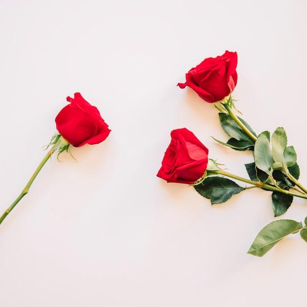 Tło z różami Darmowe Zdjęcia