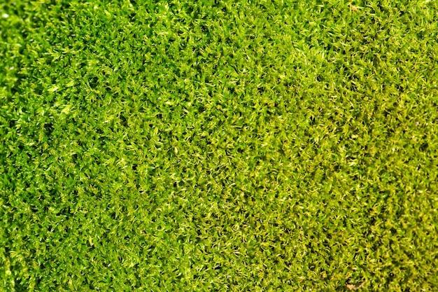 Tło Zielony Mech I Tekstura Fotografia Makro Premium Zdjęcia
