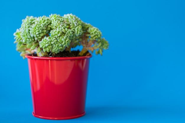 Tłustoszowata Roślina W Glinianym Garnku Nad Błękitem Premium Zdjęcia