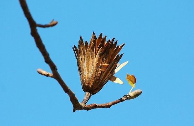 Topola Ostatni Etap Sadzonka Tulipan Seed Darmowe Zdjęcia