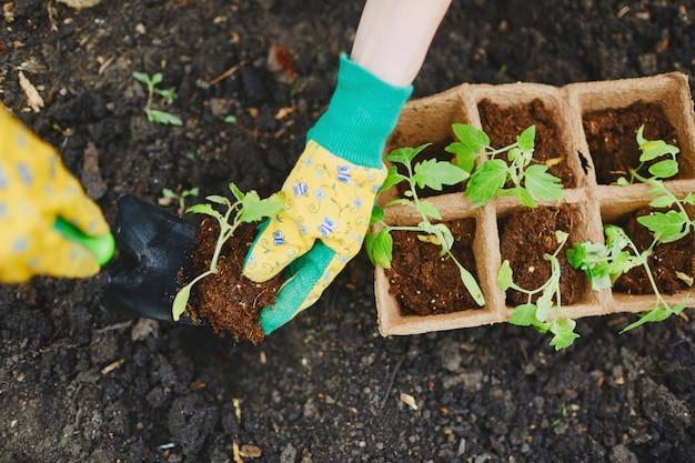 Torf Liść Okupacja Rolnictwo Botaniczny Premium Zdjęcia