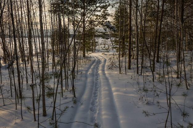 Trasy Narciarskie W Lesie. ścieżka W Gęstym Zaśnieżonym Lesie Premium Zdjęcia