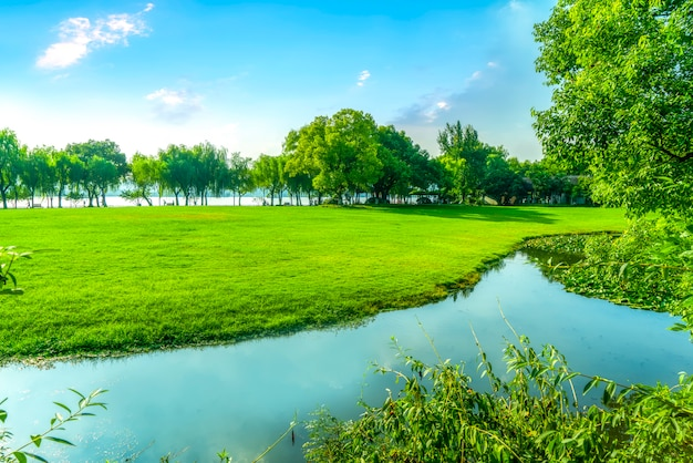 Trawa I Zielone Lasy W Parku Premium Zdjęcia
