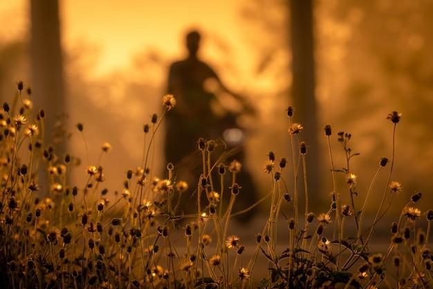 Trawa Kwiat Obok Drogi Na Zamazanym Tle Ludzie Jedzie Motocykl W Ranku Z światłem Słonecznym. Premium Zdjęcia